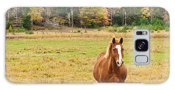 Galaxy Case - Horse In Field-fall by Cheryl Baxter