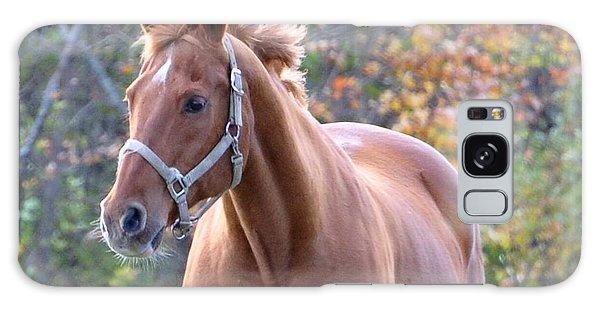 Horse Muscle Galaxy Case by Glenn Gordon