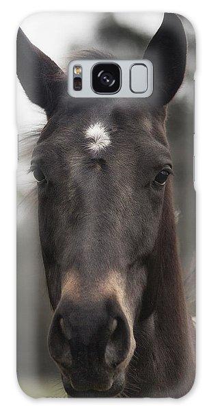 Horse With Gentle Eyes Galaxy Case