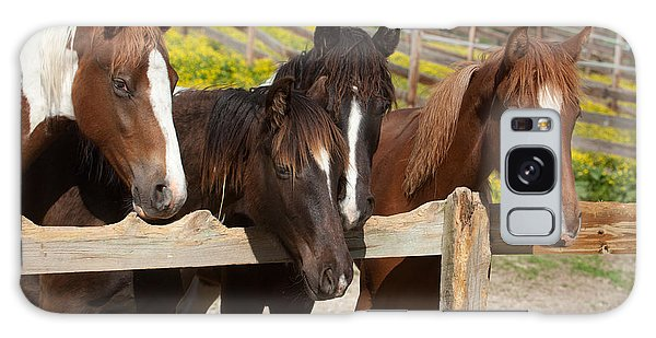 Horses Behind A Fence Galaxy Case