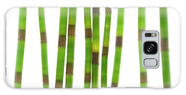 Grass Snake Galaxy Case - Horsetail Stems (equisetum Sp.) by Gustoimages/science Photo Library