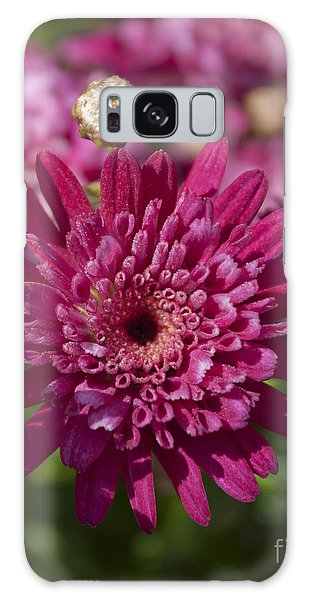 Hot Pink Chrysanthemum Galaxy Case