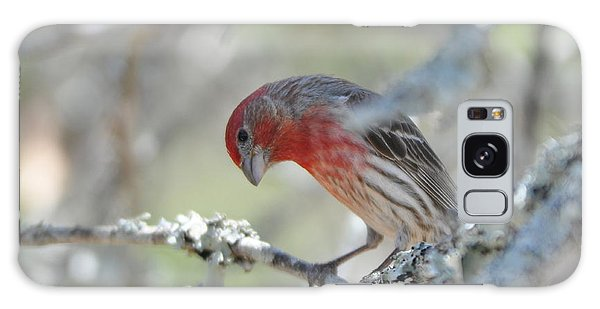 House Finch Galaxy Case