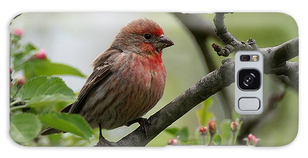 House Finch In Apple Tree Galaxy Case