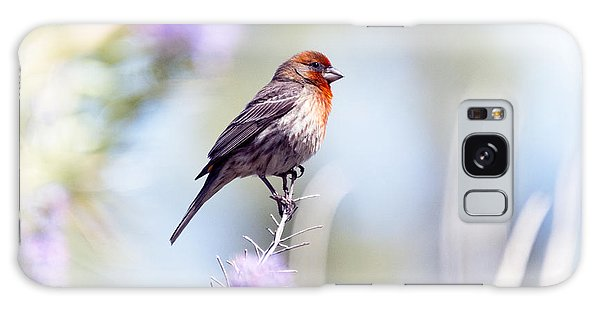 House Sparrow Galaxy Case
