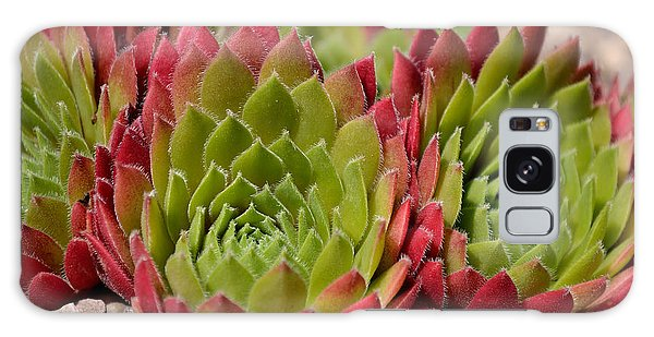 Houseleeks Aka Sempervivum From The Side Galaxy Case