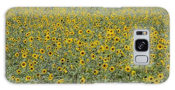 Huge Wild Sunflower Colony Galaxy Case