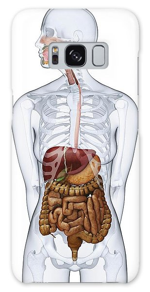 Anatomical Model Galaxy Case - Human Digestive Anatomy by Dorling Kindersley/uig
