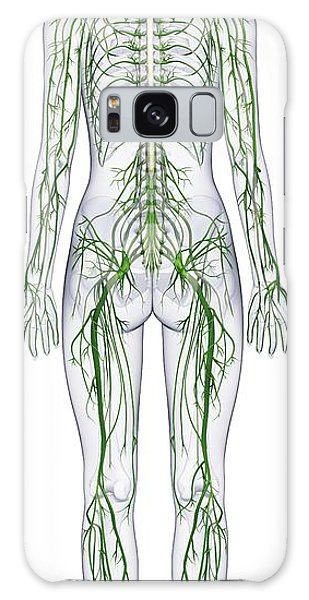 Anatomical Model Galaxy Case - Human Nervous System by Dorling Kindersley/uig