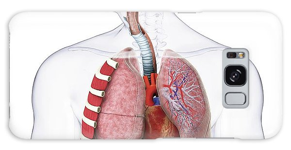 Anatomical Model Galaxy Case - Human Respiratory Anatomy by Dorling Kindersley/uig