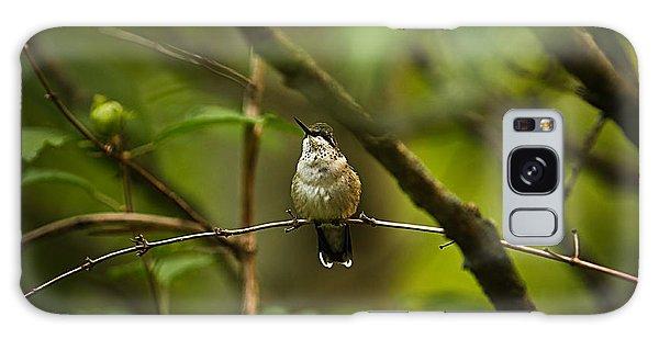 Hummingbird 3 Galaxy Case by Tammy Schneider