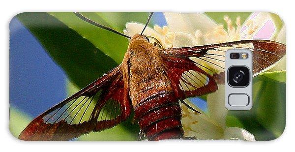 Hummingbird Clearwing Moth Galaxy Case by Myrna Bradshaw