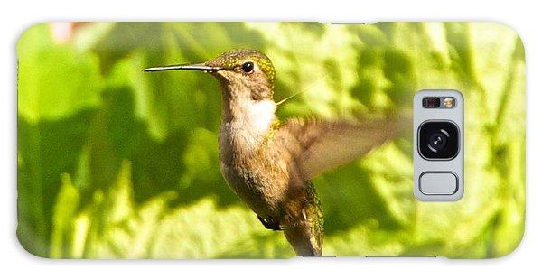 Hummingbird Highlighted By The Sun Galaxy Case