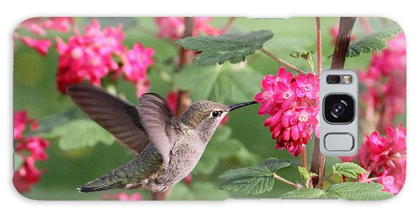Hummingbird In The Flowering Currant Galaxy Case