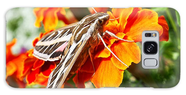 Hummingbird Moth On A Marigold Flower Galaxy Case