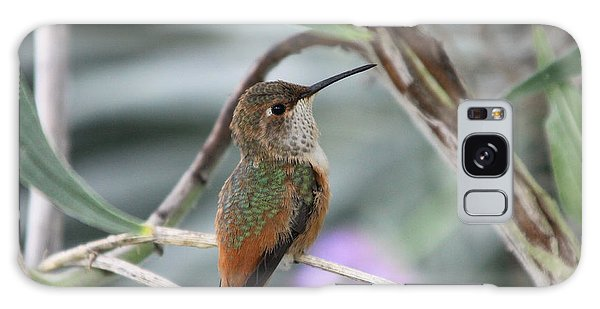 Hummingbird On A Branch Galaxy Case