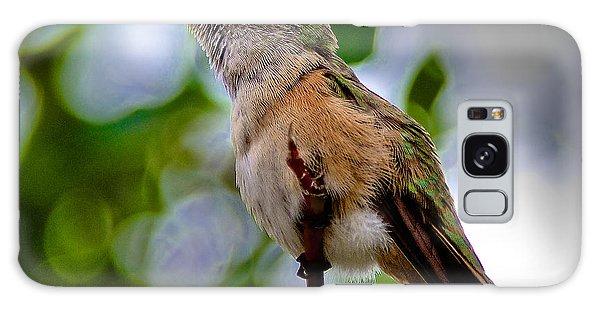 Hummingbird On A Branch Galaxy Case