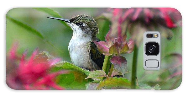 Hummingbird On A Leaf Galaxy Case