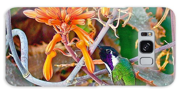 Hummingbird On Aloe In Living Desert In Palm Desert-california Galaxy Case