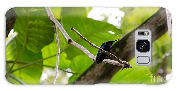 Hummingbird Out On A Limb Galaxy Case