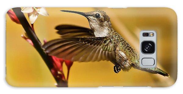 Haybale Galaxy Case - Hummingbird by Robert Bales