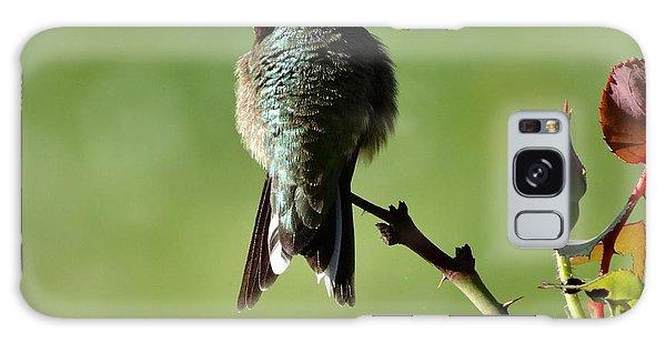 Hummingbird Visits At Sunrise Galaxy Case