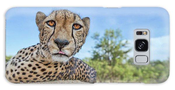 Hungry Cheetah Galaxy Case