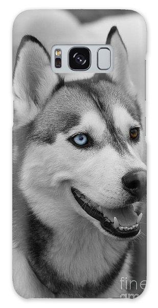 Husky Portrait Galaxy Case by Vicki Spindler