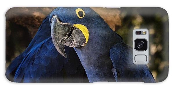 Macaw Galaxy Case - Hyacinth Macaw by Joan Carroll