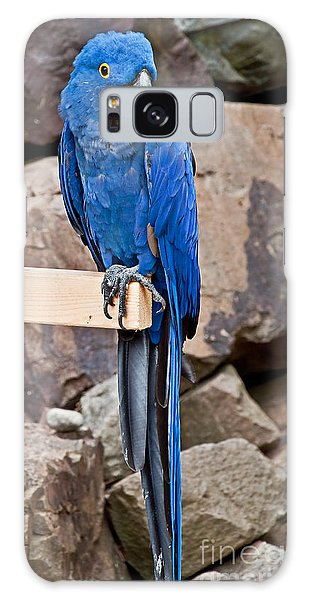 Hyacinth Macaw Parrot Bird Art Prints Galaxy Case