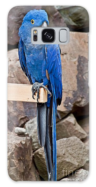 Hyacinth Macaw Parrot Bird Art Prints Galaxy Case
