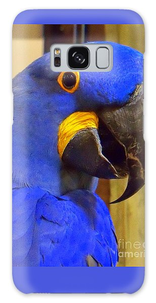 Hyacinth Macaw Portrait Galaxy Case