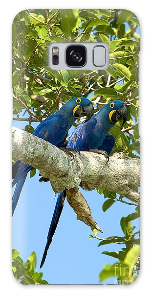 Hyacinth Macaws Brazil Galaxy Case by Gregory G Dimijian MD