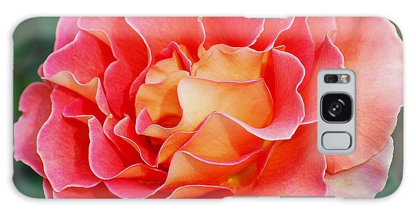 Hybrid Tea Rose  Galaxy Case by Lisa Phillips