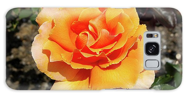 Hybrid Galaxy Case - Hybrid Tea Rose (rosa 'just Joey') by Neil Joy/science Photo Library