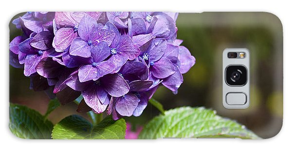 Galaxy Case featuring the photograph Hydrangea by Belinda Greb