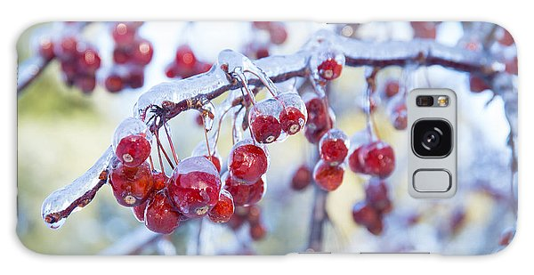 Ice Covered Crab Apples Galaxy Case