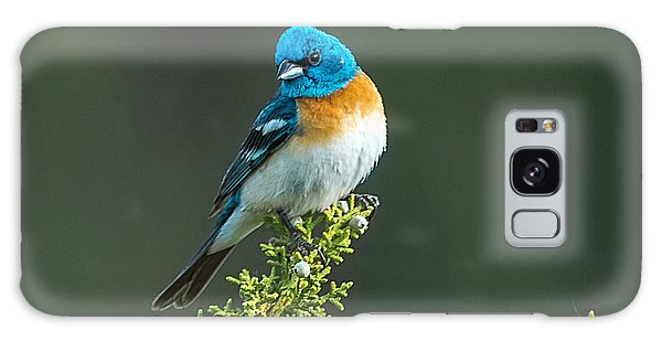 Idaho Lazuli Bunting Galaxy Case by Yeates Photography