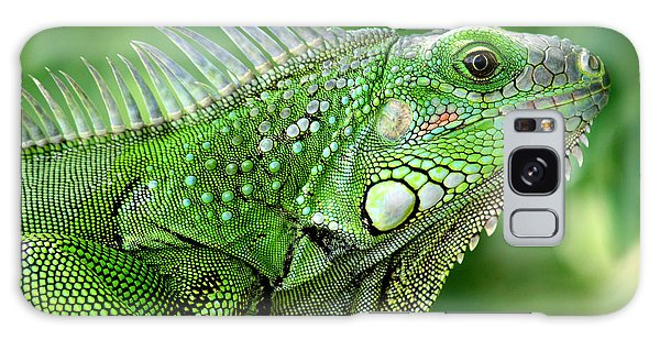 Galaxy Case featuring the photograph Iguana by Francisco Pulido
