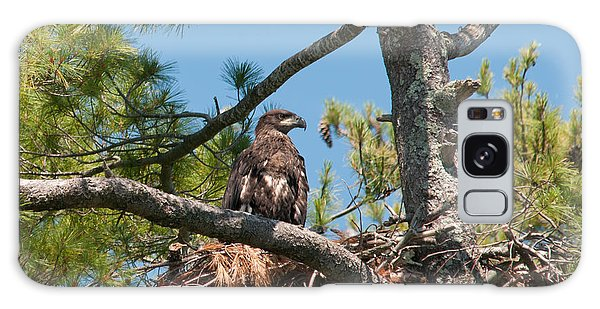 Immature Bald Eagle Galaxy Case