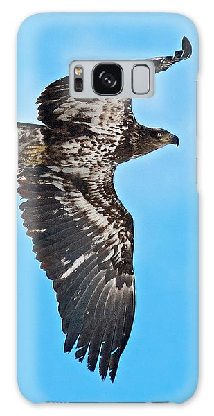 Immature Bald Eagle Galaxy Case by Stephen  Johnson