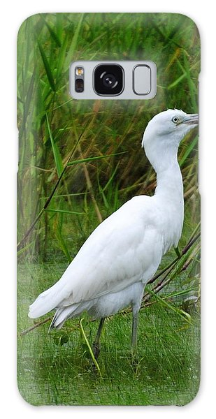 Immature Little Blue Heron Galaxy Case by Dan Williams