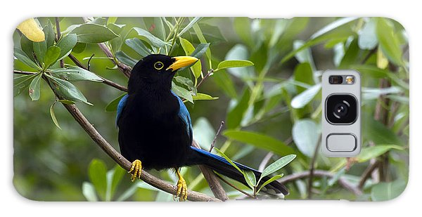 Immature Yucatan Jay Galaxy Case