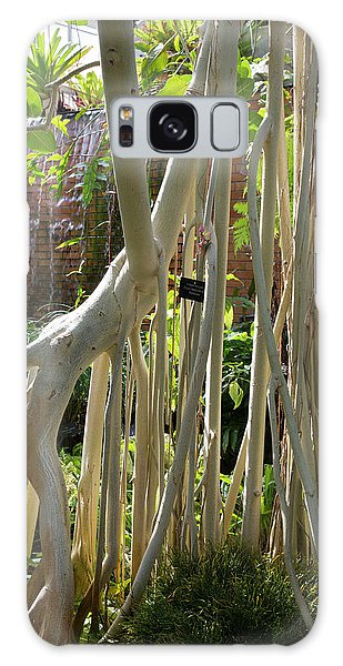 University Of Michigan Galaxy S8 Case - Indian Banyan Tree (ficus Benghalensis) by Jim West