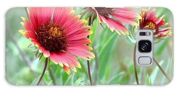Indian Blanket Wildflowers Galaxy Case by Robert Frederick