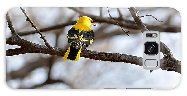 Indian Golden Oriole Galaxy Case by Fotosas Photography