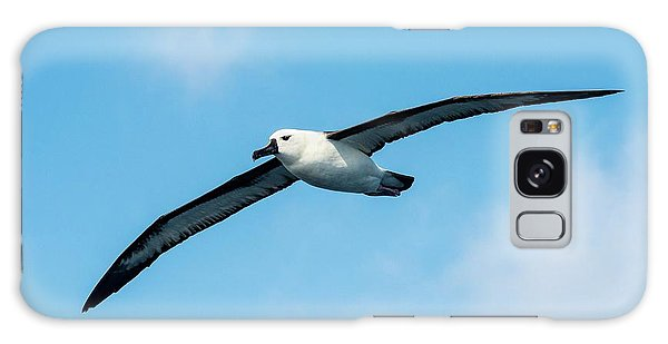 Albatross Galaxy Case - Indian Ocean Yellow-nosed Albatross by Peter Chadwick