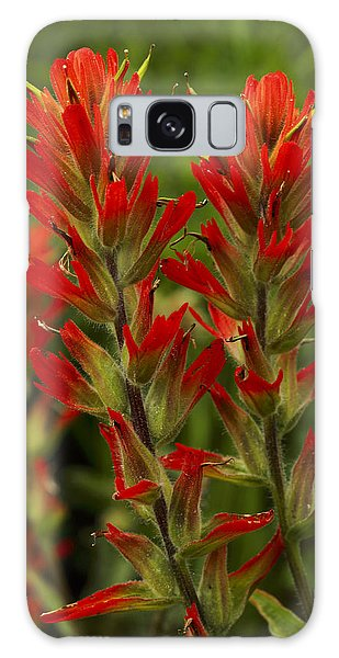 Indian Paintbrush Galaxy Case by Alan Vance Ley