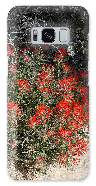 333p Indian Paintbrush Flower Galaxy Case by NightVisions