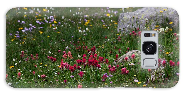 Indian Peaks Wilderness Galaxy Case - Indian Paintbrush II by Ronda Kimbrow